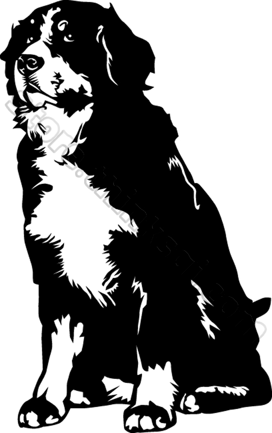 Bernese Mountain Dog clipart #1, Download drawings