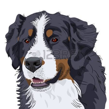 Bernese Mountain Dog clipart #11, Download drawings