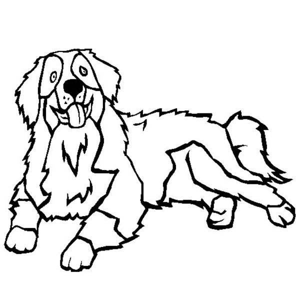 Bernese Mountain Dog coloring #1, Download drawings