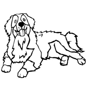 Bernese Mountain Dog coloring #5, Download drawings