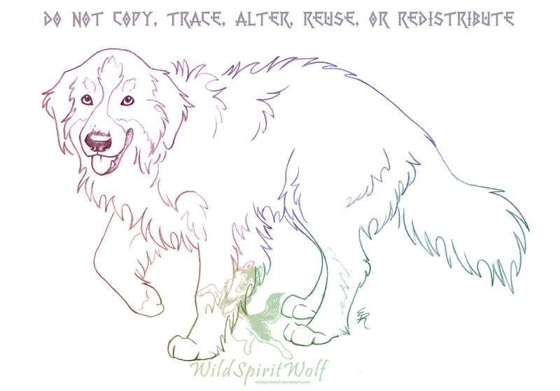 Bernese Mountain Dog coloring #9, Download drawings