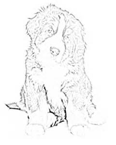 Bernese Mountain Dog coloring #4, Download drawings