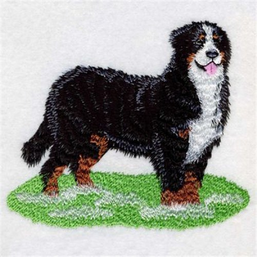 Bernese Mountain Dog coloring #17, Download drawings