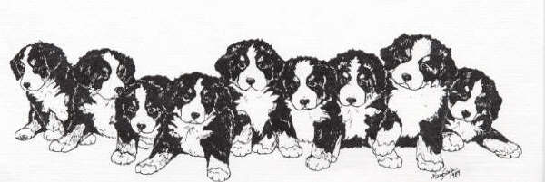 Bernese Mountain Dog coloring #10, Download drawings