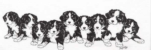 Bernese Mountain Dog coloring #10, Download drawings