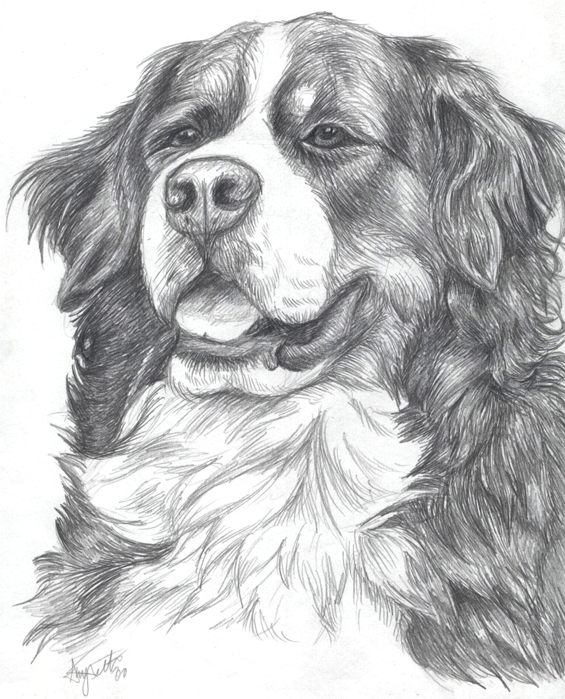 Bernese Mountain Dog coloring #12, Download drawings