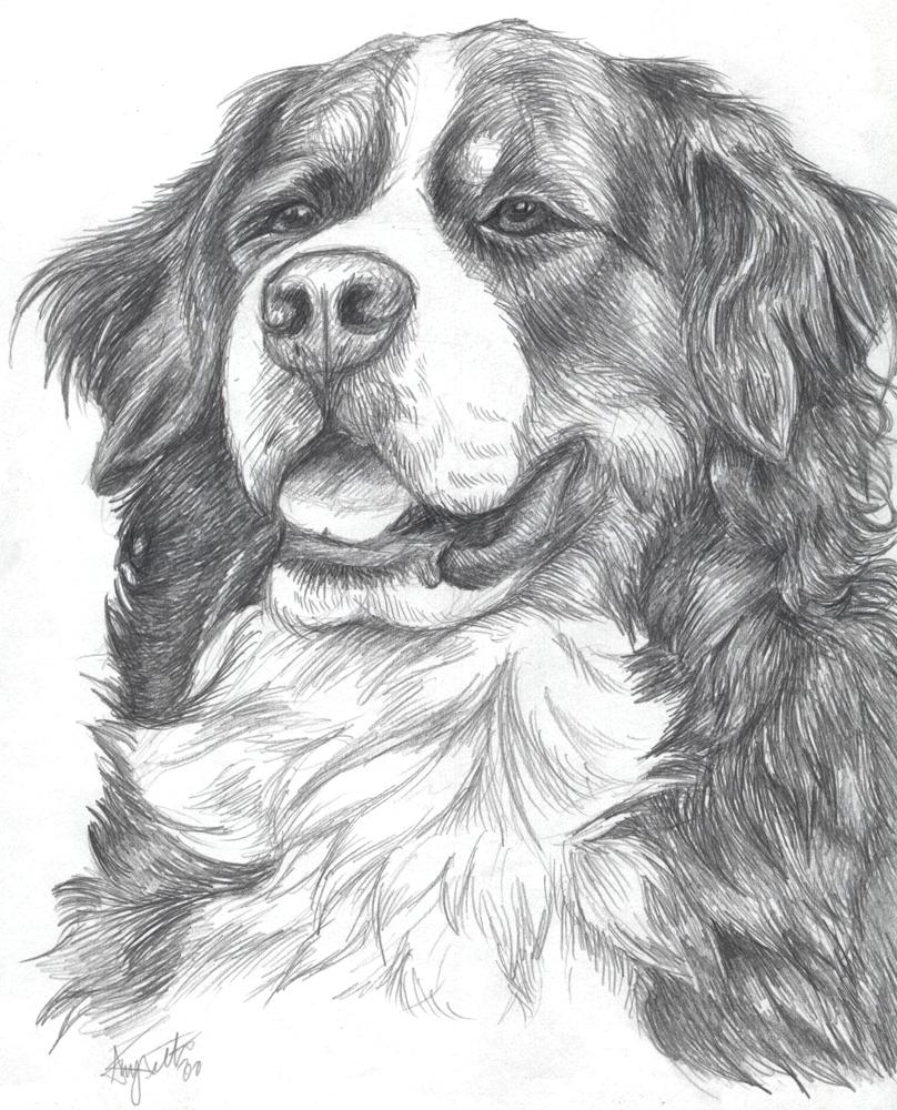 Bernese Mountain Dog coloring #12, Download drawings