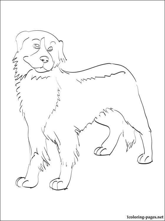 Bernese Mountain Dog coloring #18, Download drawings