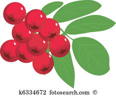 Berry clipart #2, Download drawings
