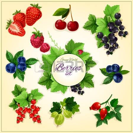 Berry clipart #11, Download drawings