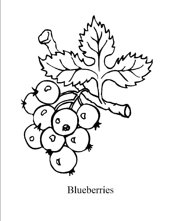 Berry coloring #8, Download drawings