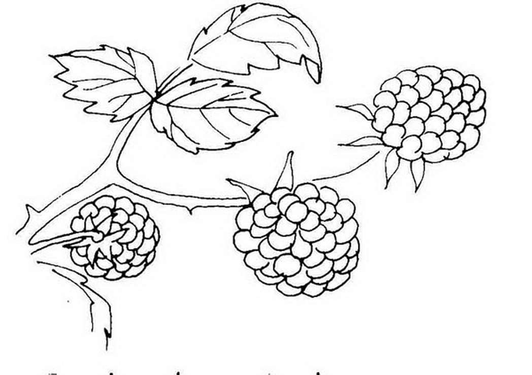 Berry coloring #3, Download drawings
