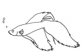 Betta clipart #9, Download drawings