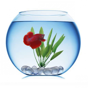 Betta clipart #8, Download drawings
