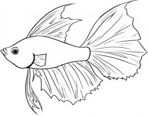 Betta clipart #4, Download drawings