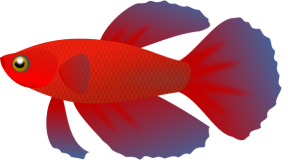 Betta clipart #17, Download drawings