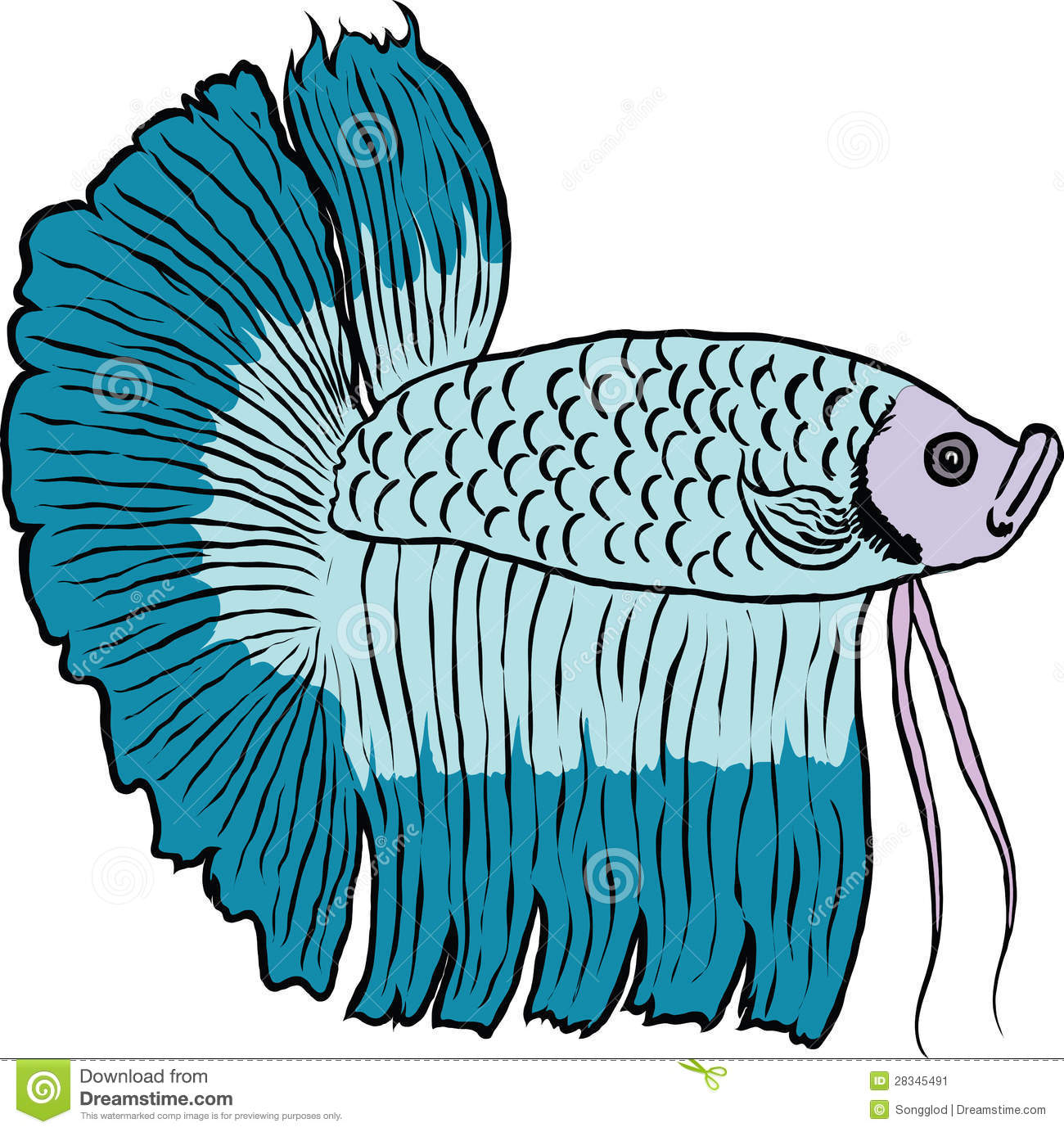 Siamese Fighting Fish clipart #1, Download drawings