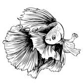 Betta clipart #19, Download drawings