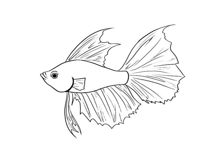 Betta coloring #9, Download drawings