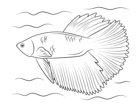 Betta coloring #2, Download drawings