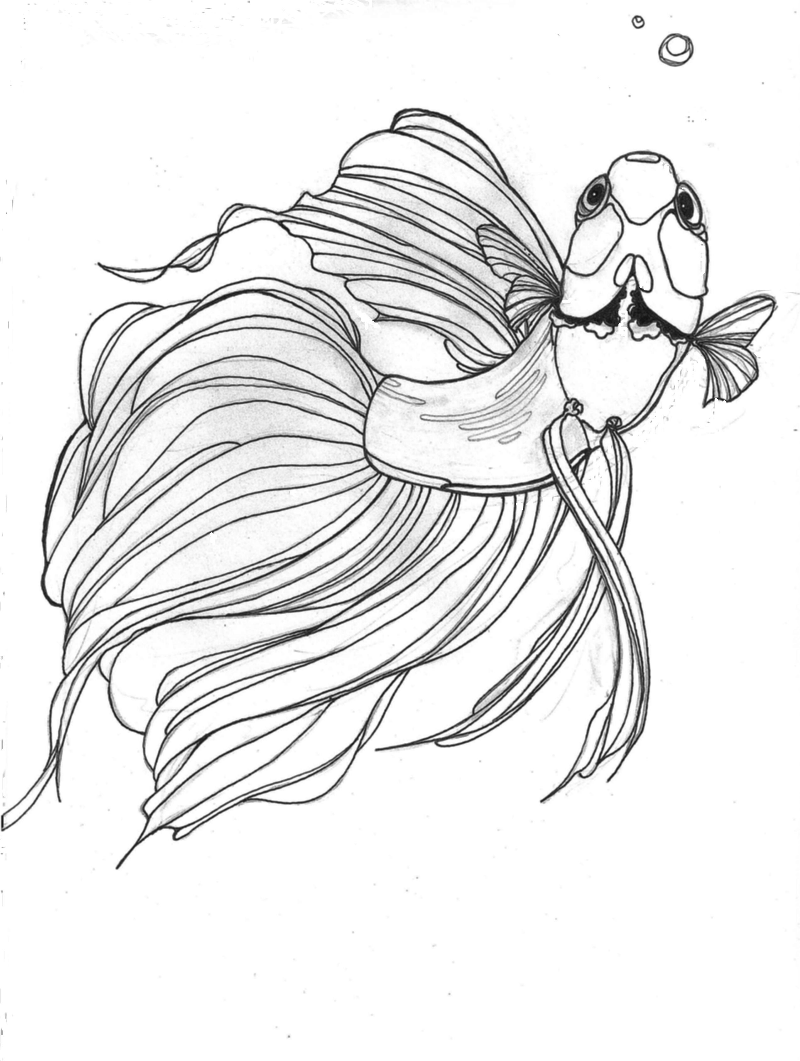 Betta coloring #15, Download drawings