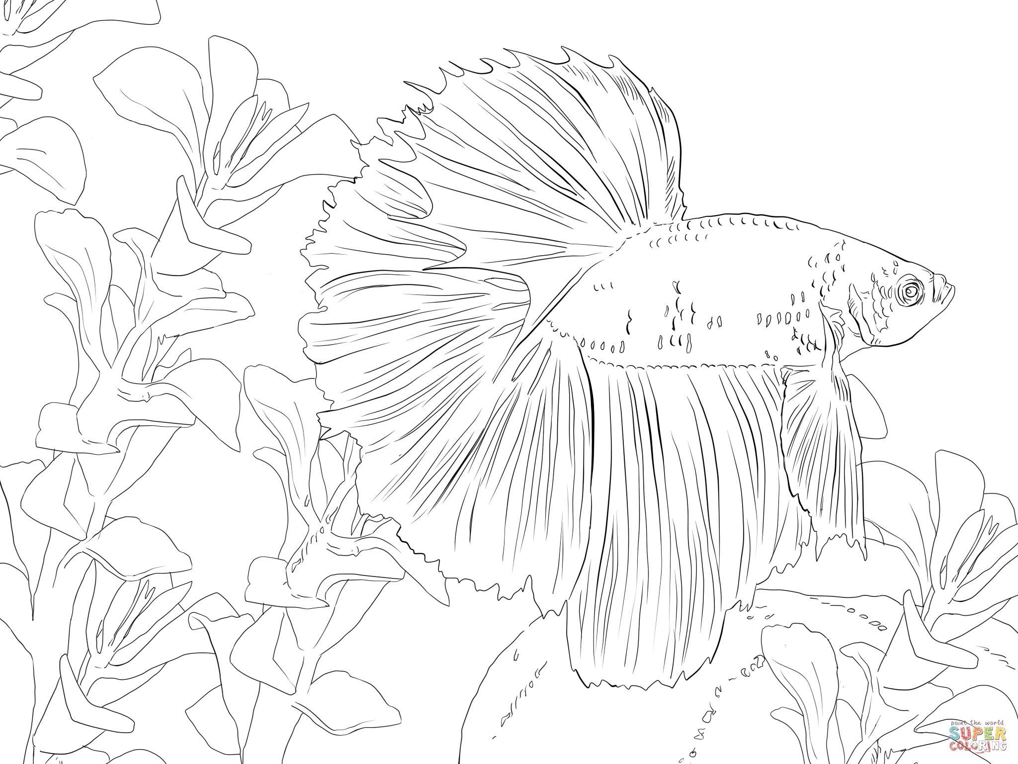 Betta coloring #12, Download drawings