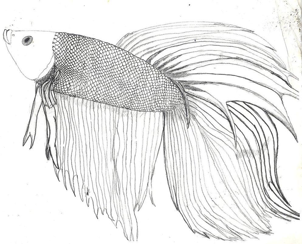 Betta coloring #4, Download drawings