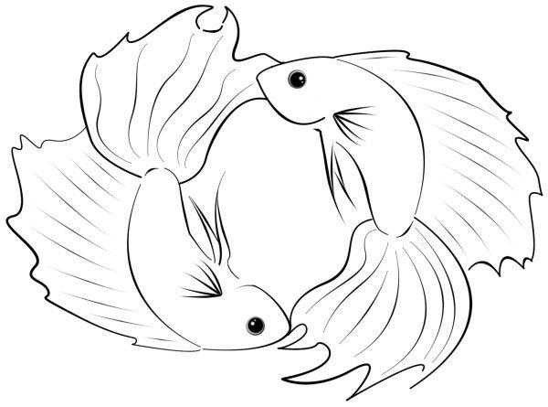 Betta coloring #3, Download drawings