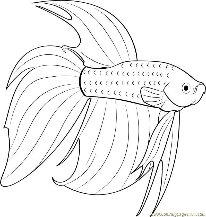 Betta coloring #19, Download drawings