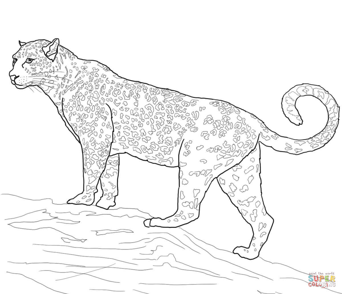 Big Cat coloring #6, Download drawings