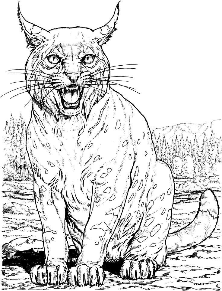 Big Cat coloring #8, Download drawings