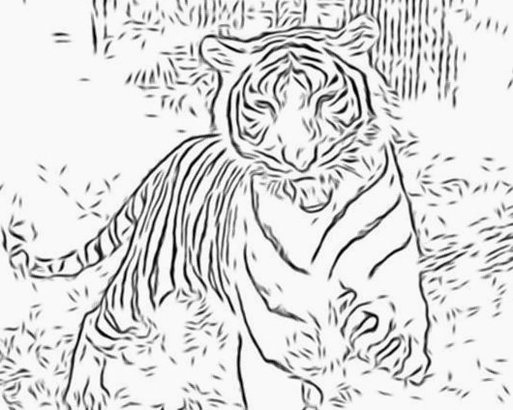 Big Cat coloring #12, Download drawings