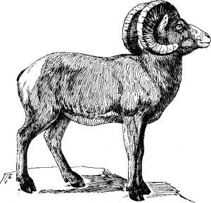 Bighorn Sheep clipart #17, Download drawings