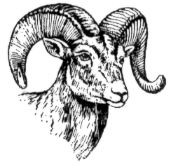 Bighorn Sheep clipart #14, Download drawings