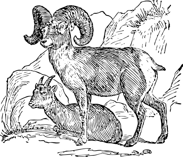 Bighorn Sheep clipart #11, Download drawings
