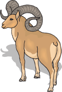 Bighorn Sheep clipart #3, Download drawings