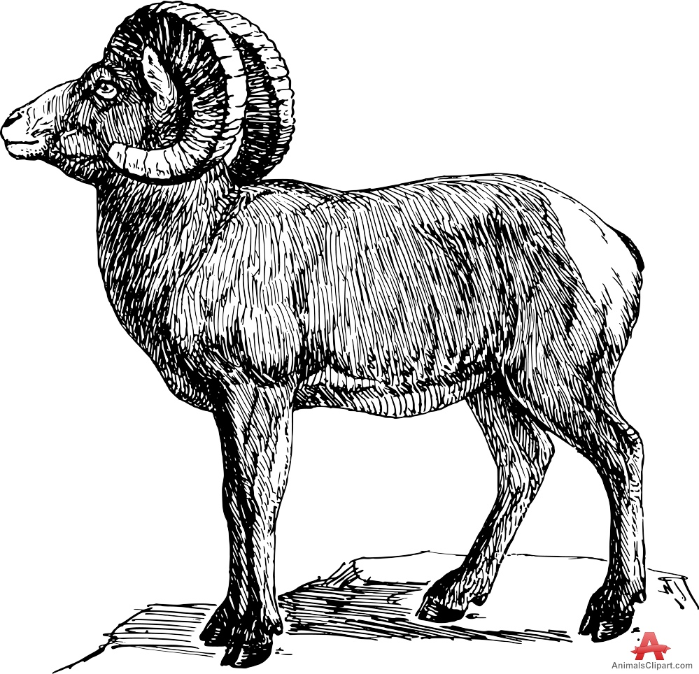 Bighorn Sheep clipart #16, Download drawings