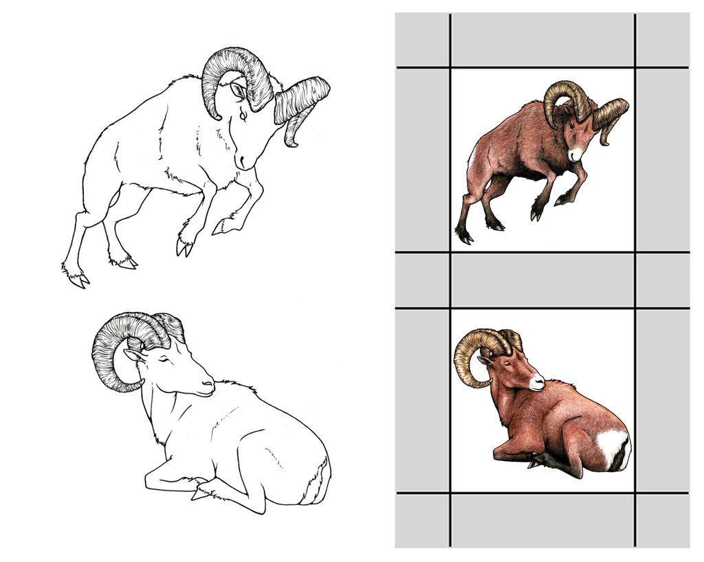 Bighorn Sheep coloring #18, Download drawings