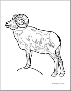 Bighorn Sheep coloring #7, Download drawings