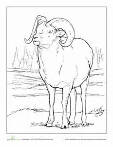 Bighorn Sheep coloring #6, Download drawings