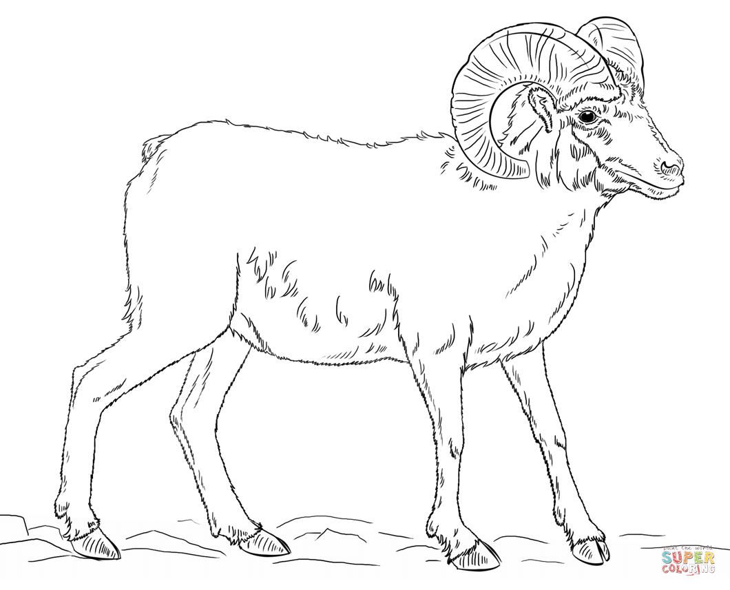 Bighorn Sheep coloring #4, Download drawings