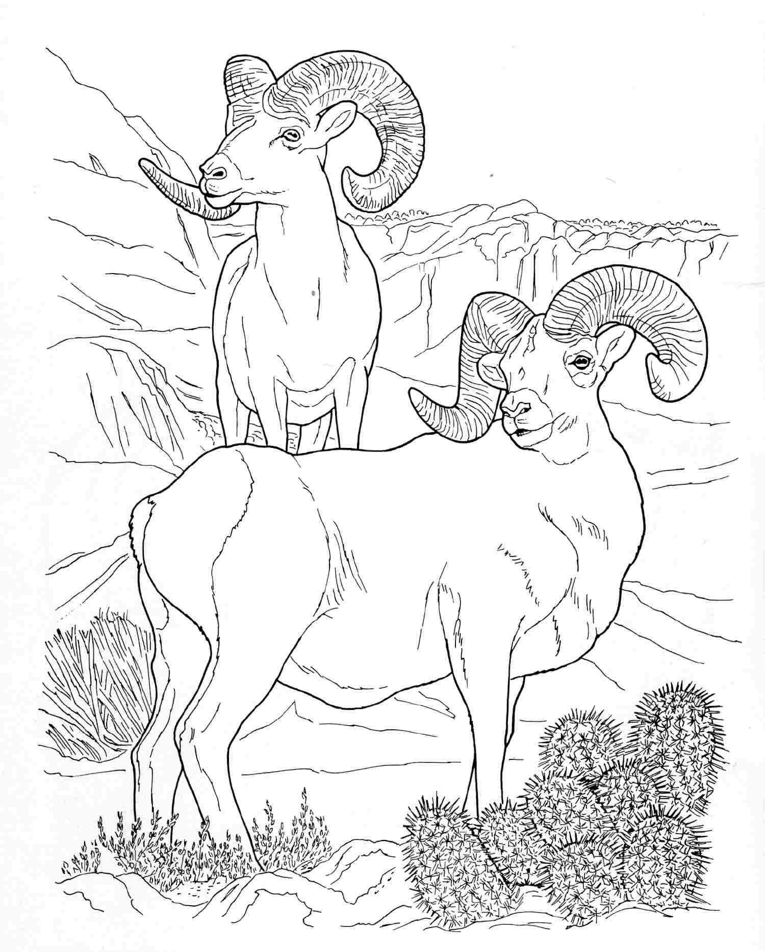 Bighorn Sheep coloring #15, Download drawings