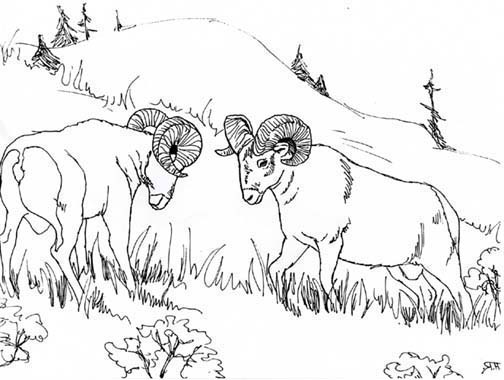 Bighorn Sheep coloring #17, Download drawings