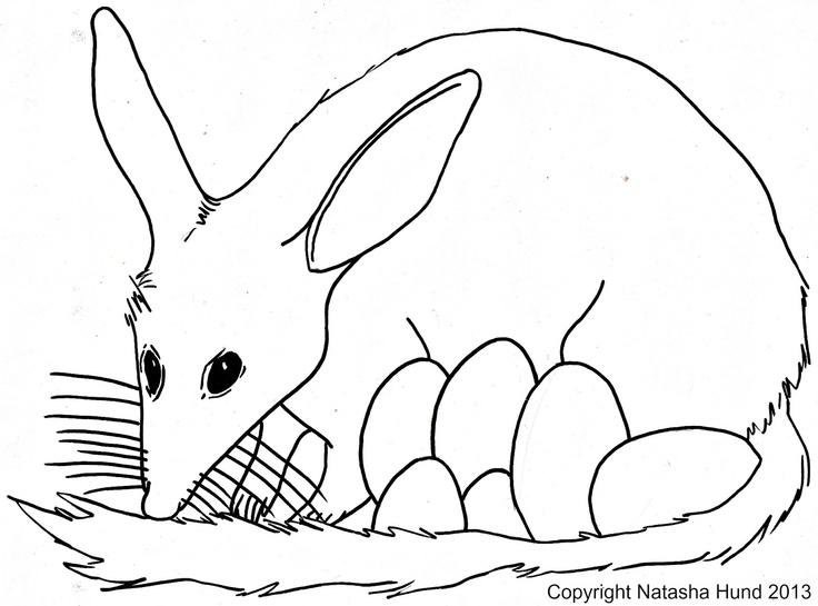 Bilby coloring #3, Download drawings