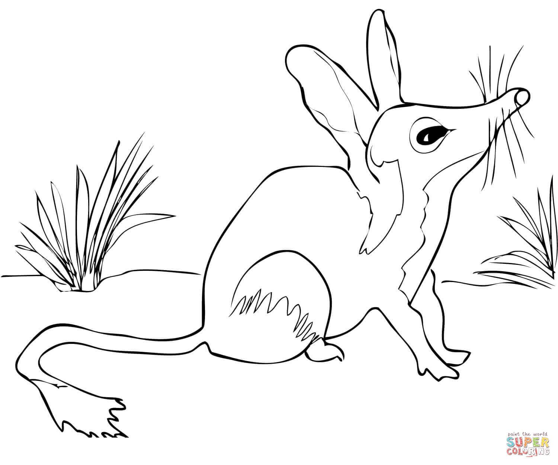 Bilby coloring #5, Download drawings