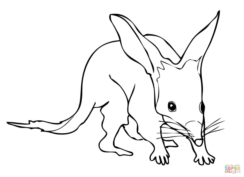 Bilby coloring #6, Download drawings