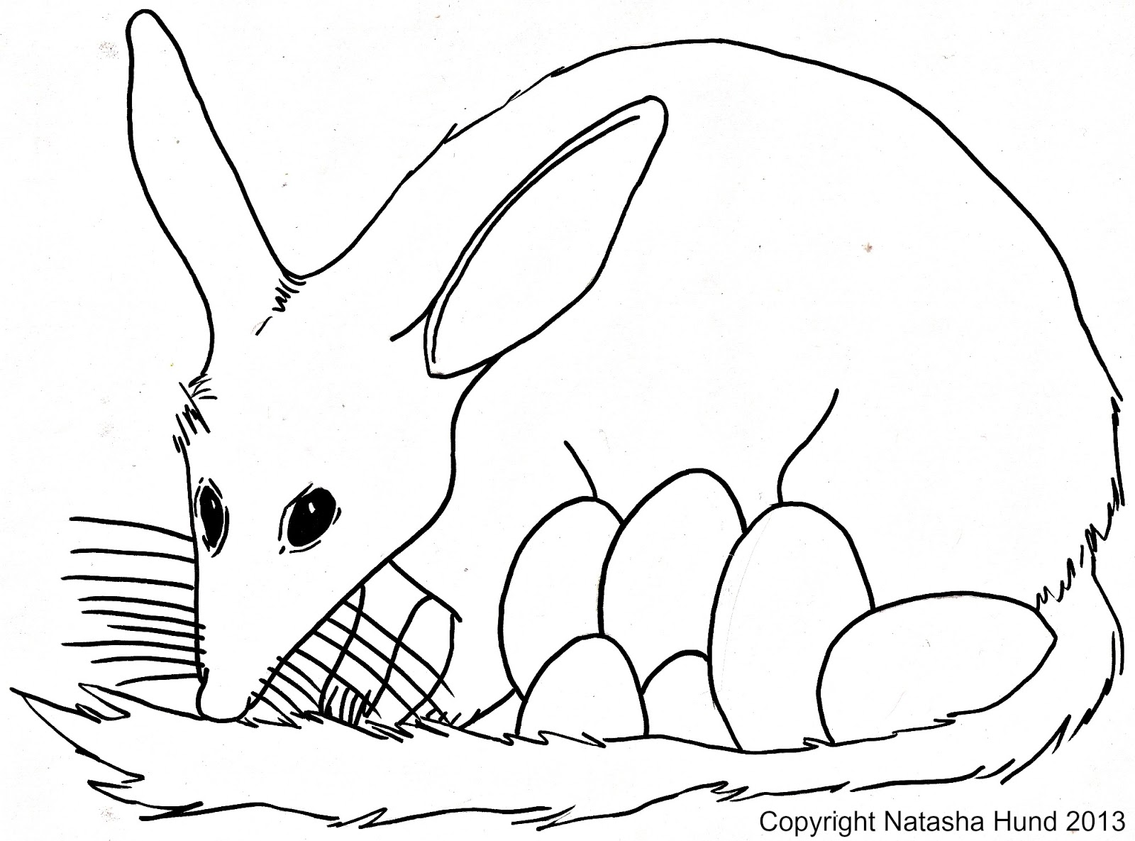 Bilby coloring #1, Download drawings