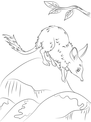 Bilby coloring #2, Download drawings
