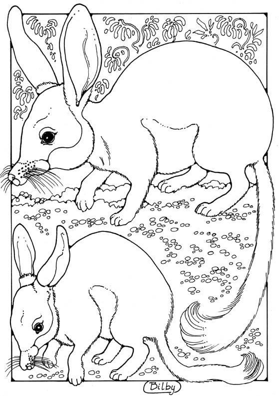 Bilby coloring #8, Download drawings