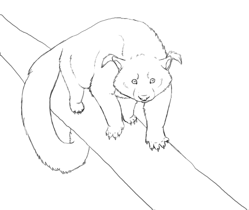 Binturong AOL Image Search Results. Binturong Animal Coloring Pages.
